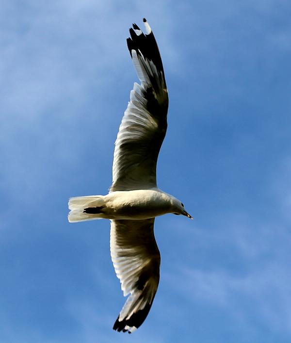 Gull Lake 风情